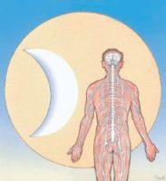 Mensch anatomie