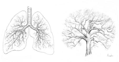 Lunge und Baum