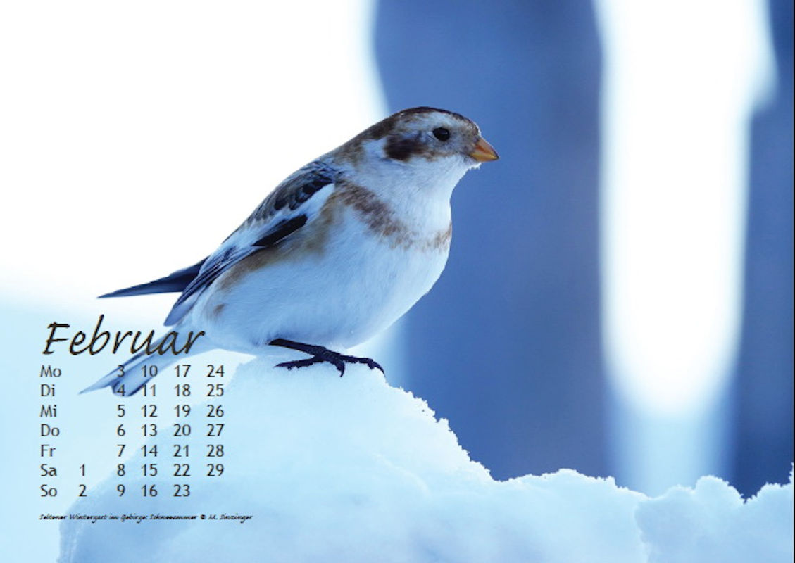 sinzinger-martin-kalender-2020-februar