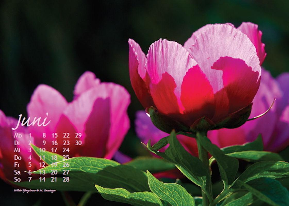 sinzinger-martin-kalender-2020-juni