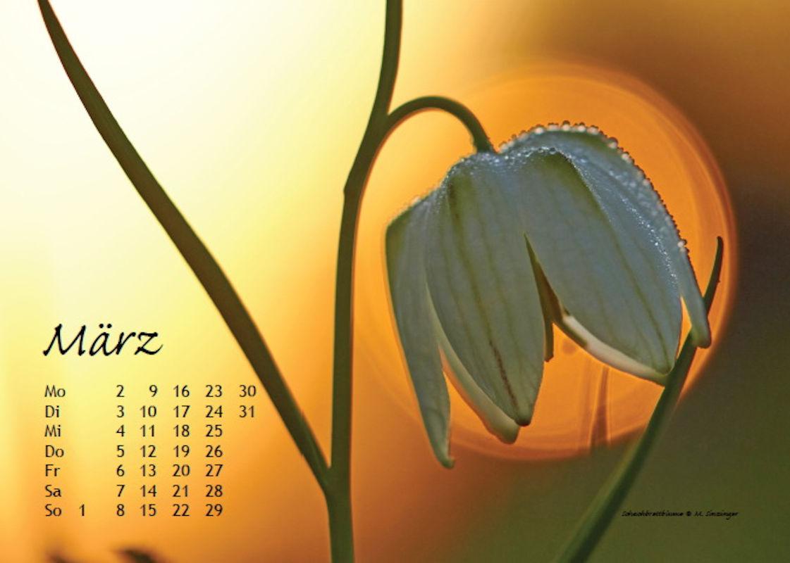 sinzinger-martin-kalender-2020-maerz