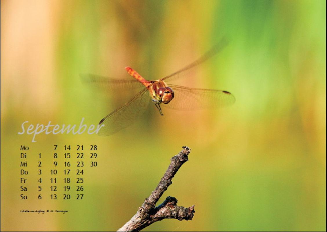 sinzinger-martin-kalender-2020-september